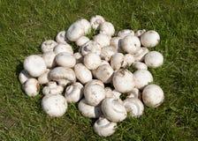 champignon Arkivbilder