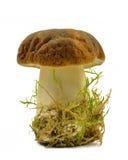 champignon Photographie stock libre de droits
