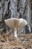 Champignon Photo libre de droits