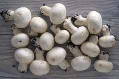 Champignon Stock Photography