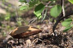 Champignon photos stock