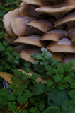 Champignon Image stock