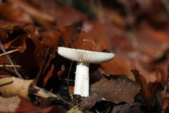 Champignon Photographie stock