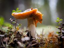 Champignon Photos stock