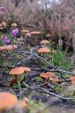 Champignon anglais de forêt Photo libre de droits