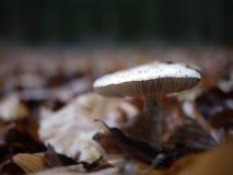 Champignon avec des feuilles d'automne autour Photo stock