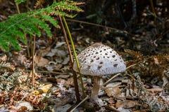 Champignon blanc dans la forêt Photo stock