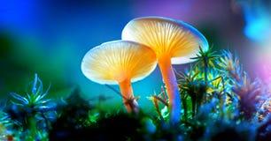Champignon Champignons rougeoyants d'imagination dans la forêt d'obscurité de mystère photo libre de droits