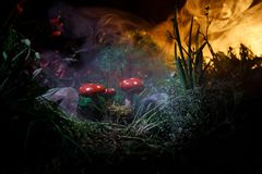Champignon Champignons rougeoyants d'imagination en plan rapproché foncé de forêt de mystère Muscaria d'amanite, agaric de mouche Image libre de droits
