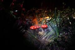 Champignon Champignons rougeoyants d'imagination en plan rapproché foncé de forêt de mystère Muscaria d'amanite, agaric de mouche Photos libres de droits