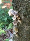 Champignon d'arbre Photo libre de droits