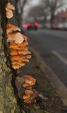 Champignon d'arbre Photographie stock libre de droits