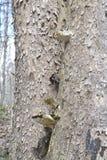 Champignon d'arbre images libres de droits