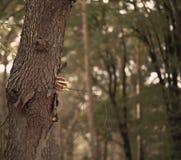 Champignon d'arbre pendant la saison d'automne avec le fond naturel photographie stock