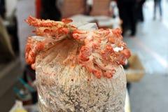 Champignon d'huître rose L'huître bleue s'élevant dans les champignons d'huître roses frais de sciure s'élevant dans élèvent le k photographie stock