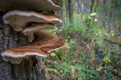 Champignon dans l'arbre Photographie stock libre de droits