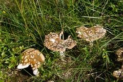 Champignon dans l'herbe Photographie stock libre de droits