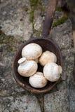 Champignon dans la cuillère en bois photographie stock libre de droits