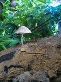 Champignon dans une branche d'arbre Image libre de droits