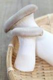 Champignon de boletus Image libre de droits