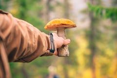 champignon de boletus d'Orange-chapeau dans la main de l'homme Images stock