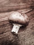 Champignon de châtaigne Photo libre de droits