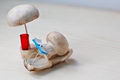 Champignon de champignon de paris sur un canapé sous un parapluie Images libres de droits