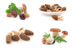 Champignon de couche comestible Photos libres de droits