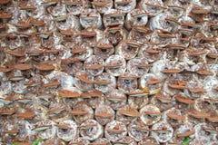 Champignon de couche dans la ferme photos libres de droits