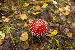Champignon de couche dans le bois Image libre de droits