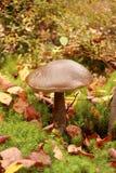 Champignon de couche dans les bois Usines de forêt Photo libre de droits