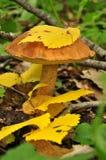 Champignon de couche dans une forêt Photographie stock libre de droits