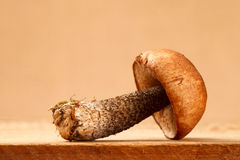champignon de couche de boletus d'Orange-capuchon sur le panneau en bois Photos stock