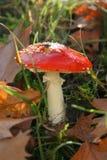 Champignon de couche de forêt Photo libre de droits