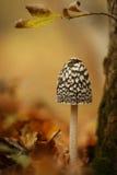 Champignon de couche de forêt Photos stock