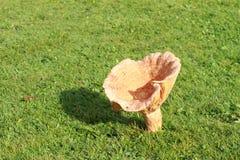 Champignon de couche de pin rouge Photo libre de droits