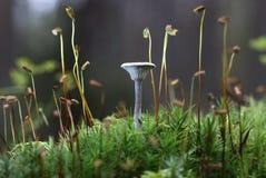 Champignon de couche en automne Photo libre de droits