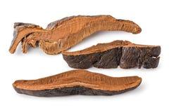 Champignon de couche sec de Lingzhi (lucidum de Ganoderma) image libre de droits