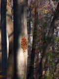 Champignon de couche sur l'arbre photos stock
