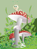 Champignon de couche. Vecteur. Photo stock