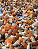 Champignon de forêt d'automne Image libre de droits