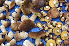 Champignon de forêt d'automne Image stock