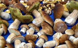 Champignon de forêt d'automne Images stock