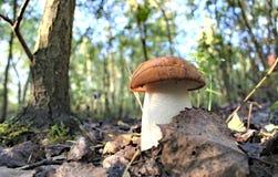 Champignon de forêt d'automne Photographie stock