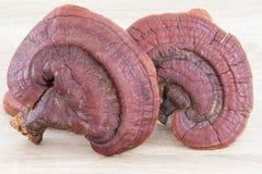 Champignon de Ganoderma Lucidum sur le bois Images stock