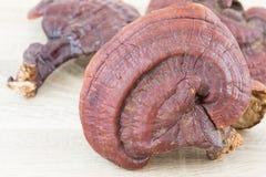 Champignon de Ganoderma Lucidum sur le bois Photographie stock