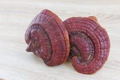 Champignon de Ganoderma Lucidum sur le bois Image libre de droits