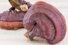 Champignon de Ganoderma Lucidum sur le fond en bois Images libres de droits