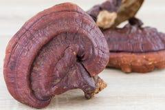 Champignon de Ganoderma Lucidum sur le fond en bois Photos stock