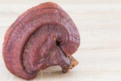 Champignon de Ganoderma Lucidum sur le fond en bois Photographie stock libre de droits